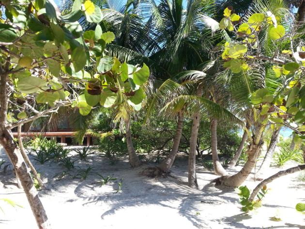Sanara jungle - Tulum yoga retreat